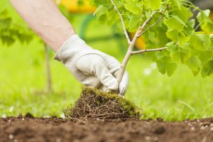 Harford County Planting, Baltimore County Landscaping